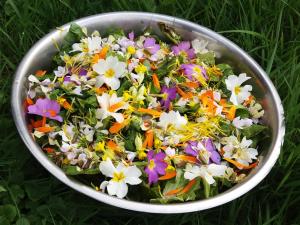 salade de printemps1